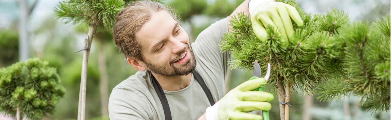 man-pruning-ornamental-trees